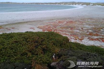 我们在南大西洋的福克兰群岛(英属)也称马尔维纳斯群岛,这里也有企鹅。 18.png