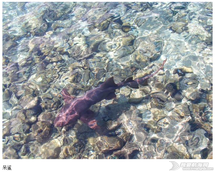 头发蓬松,机械自动化,屠宰场,养猪场,传送带 在艾克修马的小岛上,猪会游泳!----《大西洋航游760天》 24.png