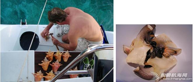 新英格兰,巴哈马,穿透力,珊瑚礁,橡皮筋 美食系列三--巴哈马海鲜,巴哈马真正名副其实的美食是海螺。---《大西洋航游760天》 7.png