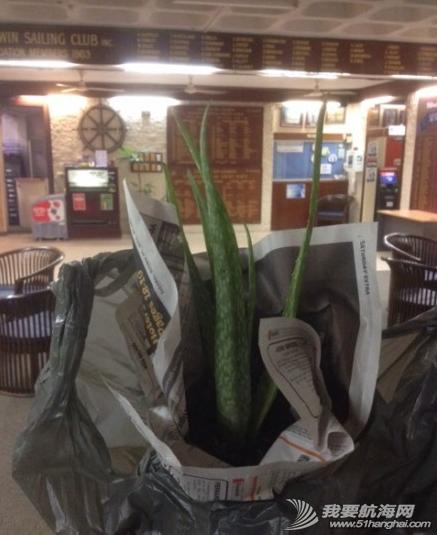 农业部,sailing,达尔文,人情味,香港 6月2日,芦荟。船上唯一的植物,被澳洲检疫的农业部老头收走时,宏岩伤心哭了。 2.png