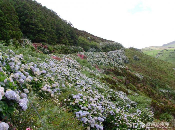 庐山瀑布,大西洋,葡萄牙,飞机场,旅游业 六月份是福罗斯最美的季节,漫山遍野的蓝绣球绽放得正艳。---《大西洋航游760天》 15.png