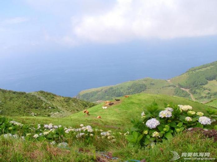 庐山瀑布,大西洋,葡萄牙,飞机场,旅游业 六月份是福罗斯最美的季节,漫山遍野的蓝绣球绽放得正艳。---《大西洋航游760天》 21.png