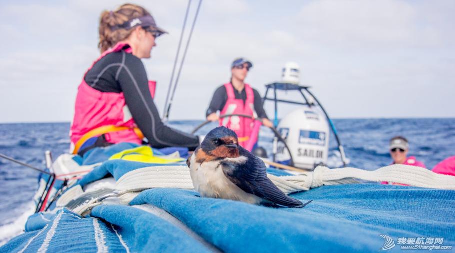 爱生雅队,尔沃环球帆船赛,随船记者 全女子船员组成的爱生雅队确定了2014-15沃尔沃环球帆船赛的随船记者 1.png
