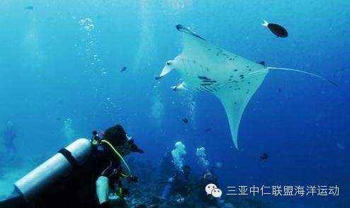 最新动态,爱好者,冒险家,潜水,关岛 潜水胜地-帕劳 0.jpg