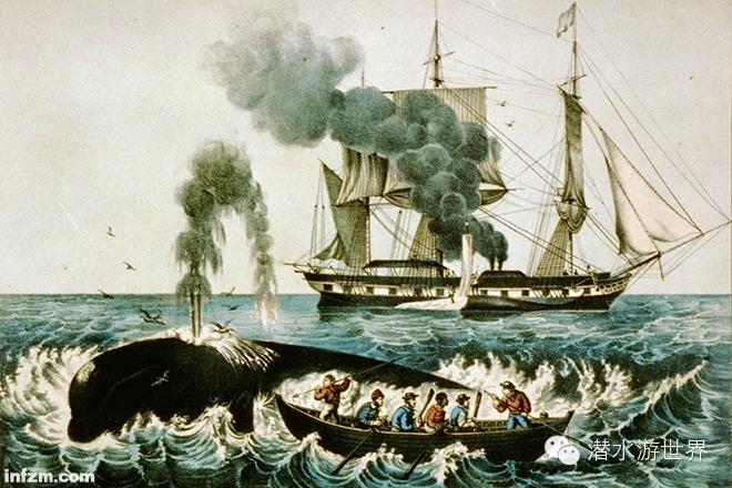 菲律宾,抹香鲸,美国,文章,技术 抹香鲸的报复--美国捕鲸船海难 0.jpg