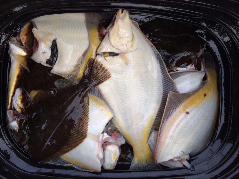 离开海参崴,钓了好多鱼 61547