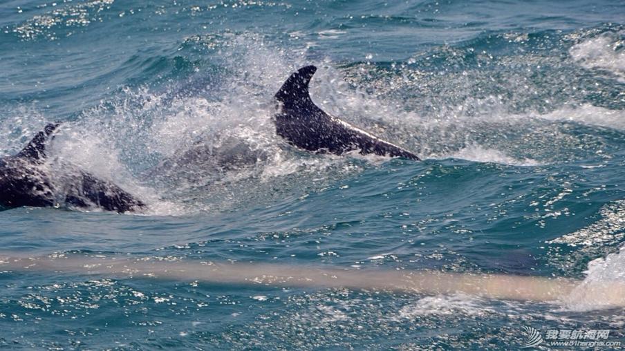 第一天开出去兜风,就有海豚护航了20分钟,成群跃身想要和我们玩…不错的开始 9.png