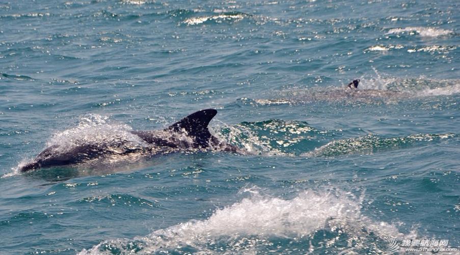 第一天开出去兜风,就有海豚护航了20分钟,成群跃身想要和我们玩…不错的开始 10.png