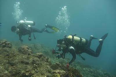 工作制服,教练员,潜水,鲨鱼,职业 潜水看鲨鱼是一种快乐 0.jpg