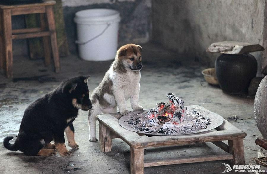 腾讯微博,新浪,摄影师,九龙江,中国 温暖:小狗围炉取暖 0.jpg