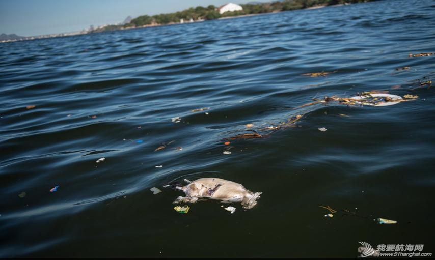 里约国际帆船赛,水质污染问题 里约奥运会的首个测试赛--2014里约国际帆船赛即将开赛,但水质污染问题再度成为焦点。 3.png