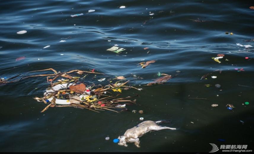 里约国际帆船赛,水质污染问题 里约奥运会的首个测试赛--2014里约国际帆船赛即将开赛,但水质污染问题再度成为焦点。 4.png