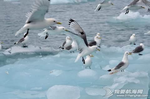 南北极高端定制旅游 203549gryobcod3v7pmdrd.jpg