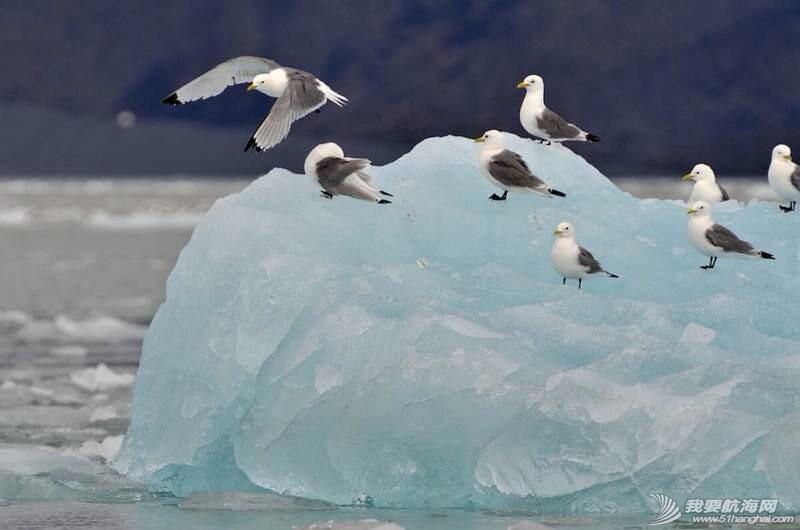 南北极高端定制旅游 203553p3r24lkgztejahlm.jpg