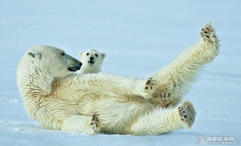 南北极高端定制旅游 203554sypjwqg8ys1oonjk.jpg
