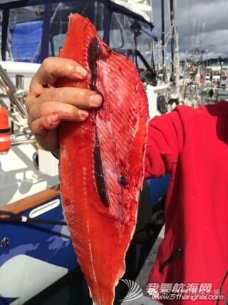 舌尖上的三文鱼