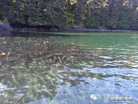 三文鱼——寻找初吻的感觉