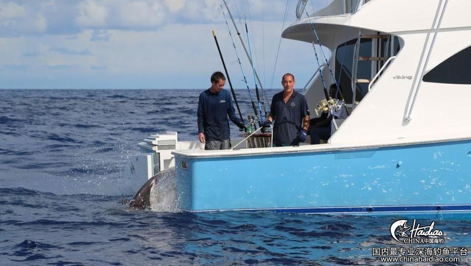 佛罗里达 17岁少年佛罗里达捕获314公斤剑鱼 102300jqdh6dnddo7zlqqn.jpg