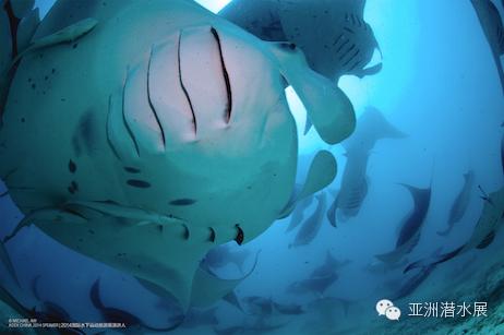 China,上海,亚洲,潜水 ADEX China亚洲潜水展--上海潜展召集令 640.jpg