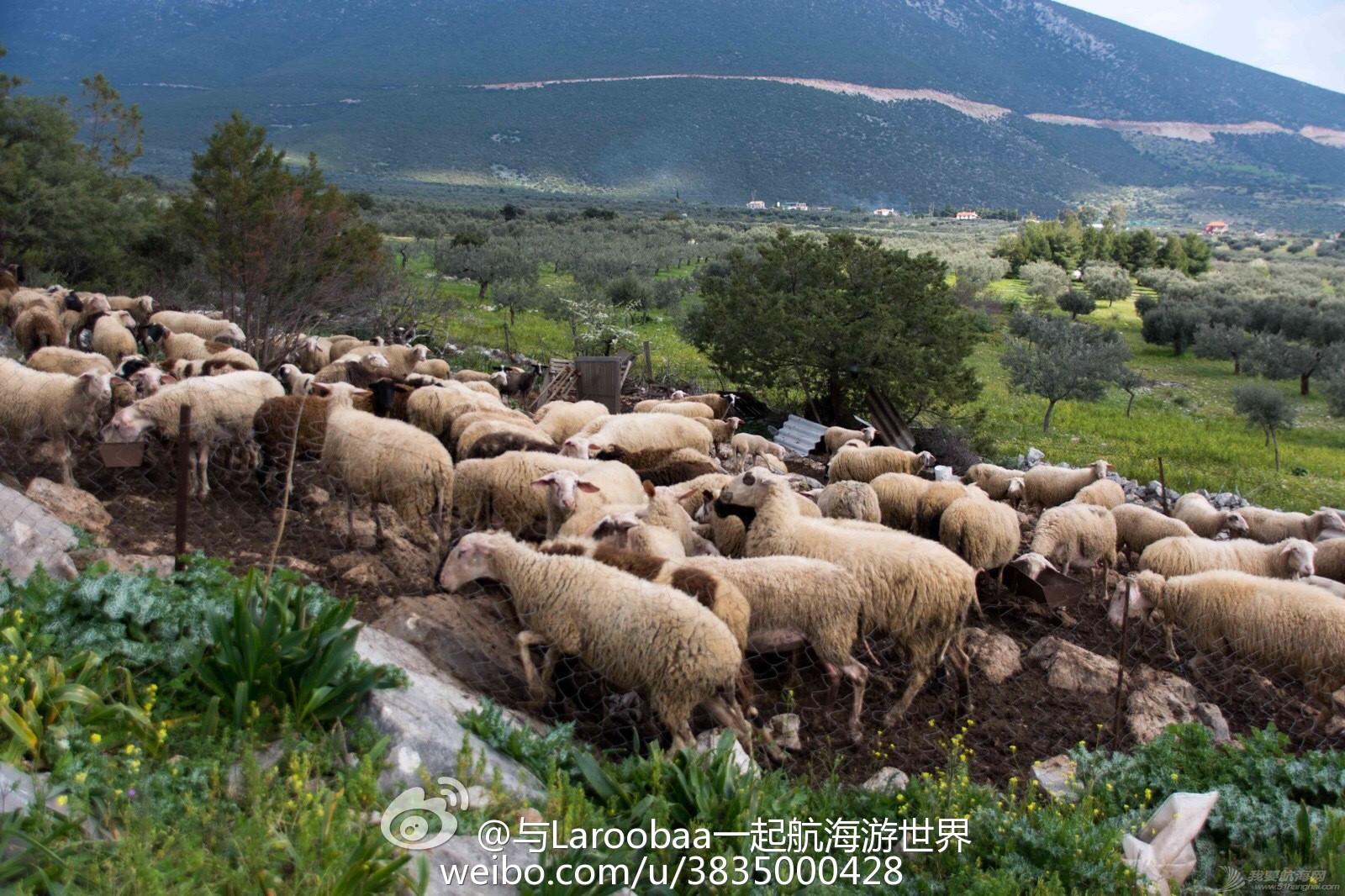 希腊,牧羊犬,宠物狗,牧羊人,石灰岩 参观希腊著名的迪迪玛教堂岩洞遭遇牧羊犬 e495766cjw1eq74s6wojkj218g0tm1b8.jpg