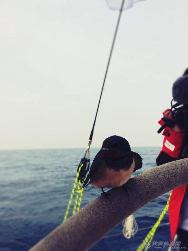 南中国海,军事演习,平安,青岛,长航 在海上的每一分钟都与激情有关-记海帆赛波澜壮阔的一天 IMG_7778.JPG