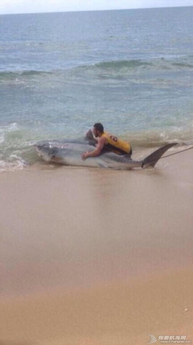男子钓到4米长虎鲨 518ad307142a2ad.jpg
