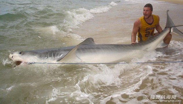 男子钓到4米长虎鲨 6f68297c15f1ff4.jpg