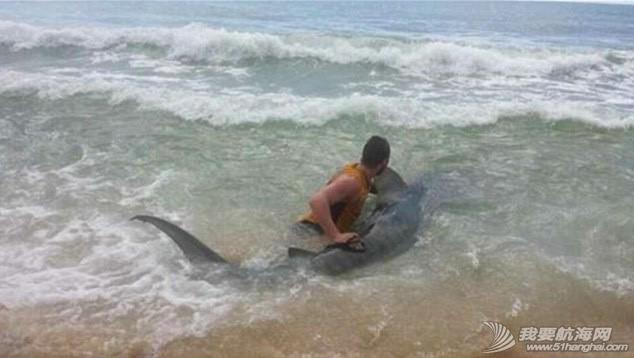 男子钓到4米长虎鲨 e3ba8eee51251f5.jpg