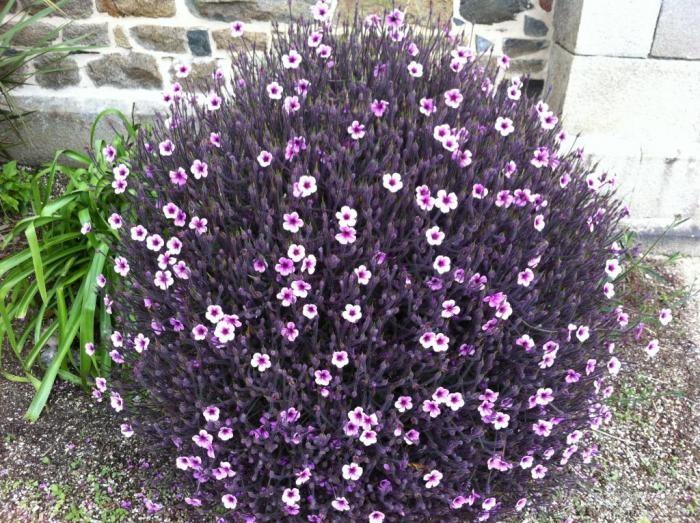 法兰西温柔美丽,花仙紫芬芳旖旎。----《再济沧海》 5.JPG