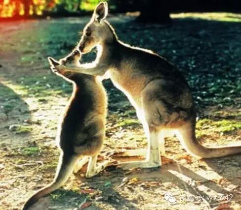 澳大利亚免签了! 4f6b92636182de60c665a13d771e55cd.jpg