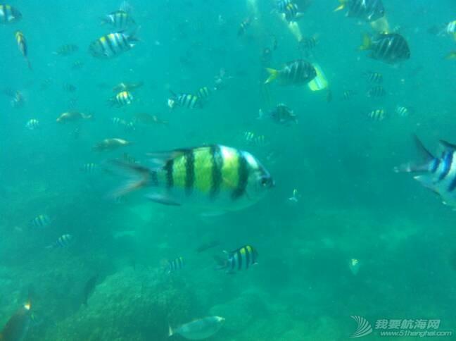 百度搜索,流浪汉,Dream,连载,潜水 海上流浪汉连载-11:原来我们还可以潜水