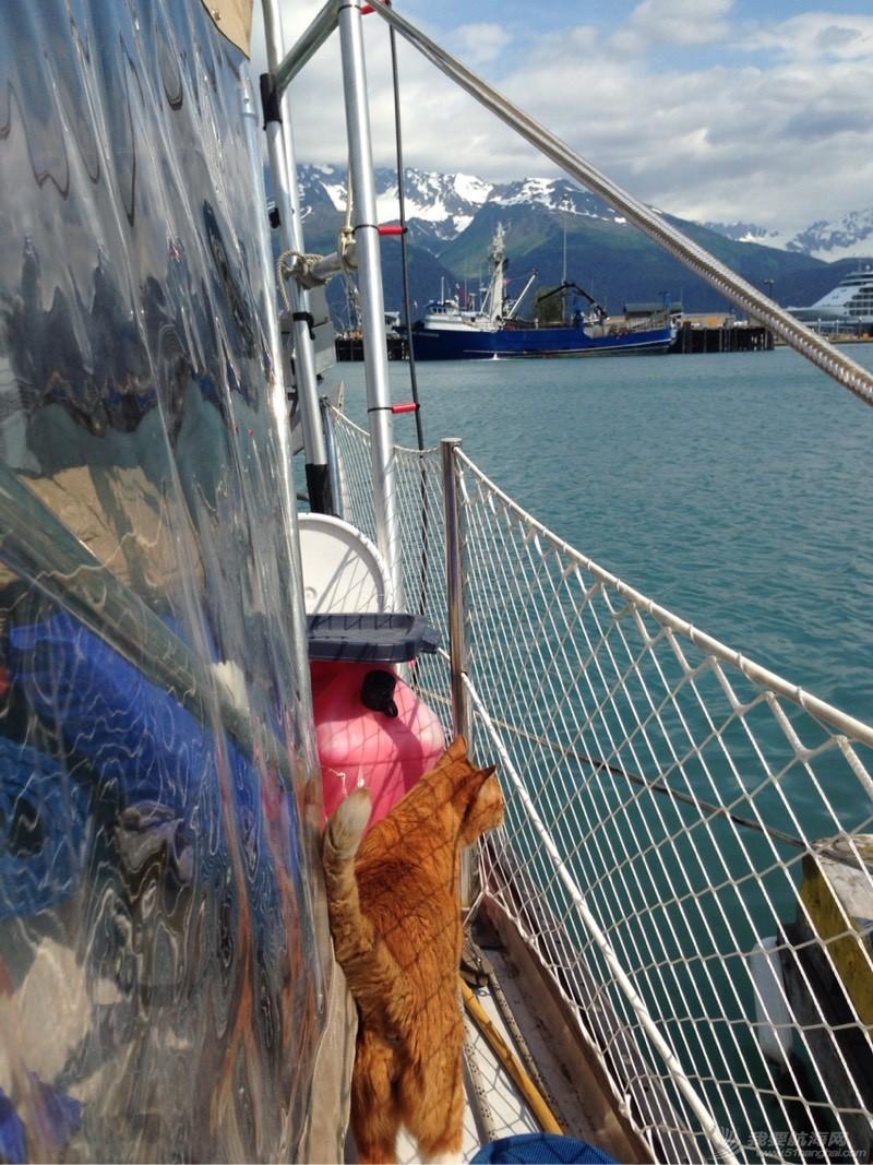 北美13姨连载-004-我的Kitty猫也适应了船上的生活,期待将来不会晕船 053610dkxfqott0kk0mx4g.jpg