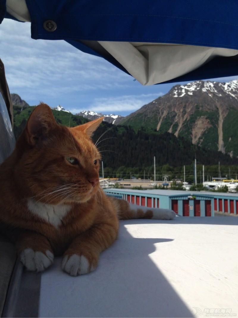 北美13姨连载-004-我的Kitty猫也适应了船上的生活,期待将来不会晕船 053611caikzdlbi8abcdig.jpg
