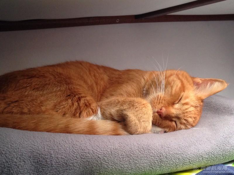 北美13姨连载-004-我的Kitty猫也适应了船上的生活,期待将来不会晕船 053611jb7qys83rxqsyyrw.jpg