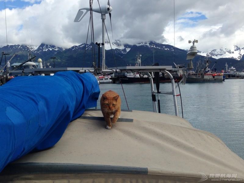 北美13姨连载-004-我的Kitty猫也适应了船上的生活,期待将来不会晕船 053611skq9x96g0l1ybl1y.jpg