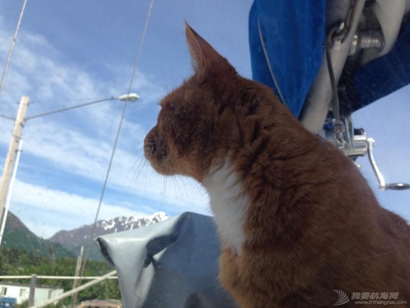 北美13姨连载-004-我的Kitty猫也适应了船上的生活,期待将来不会晕船 053612z1r1rx8rywrvxtww.jpg