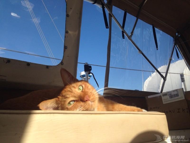 北美13姨连载-004-我的Kitty猫也适应了船上的生活,期待将来不会晕船 053612z3sfwzwlerqs3n2d.jpg