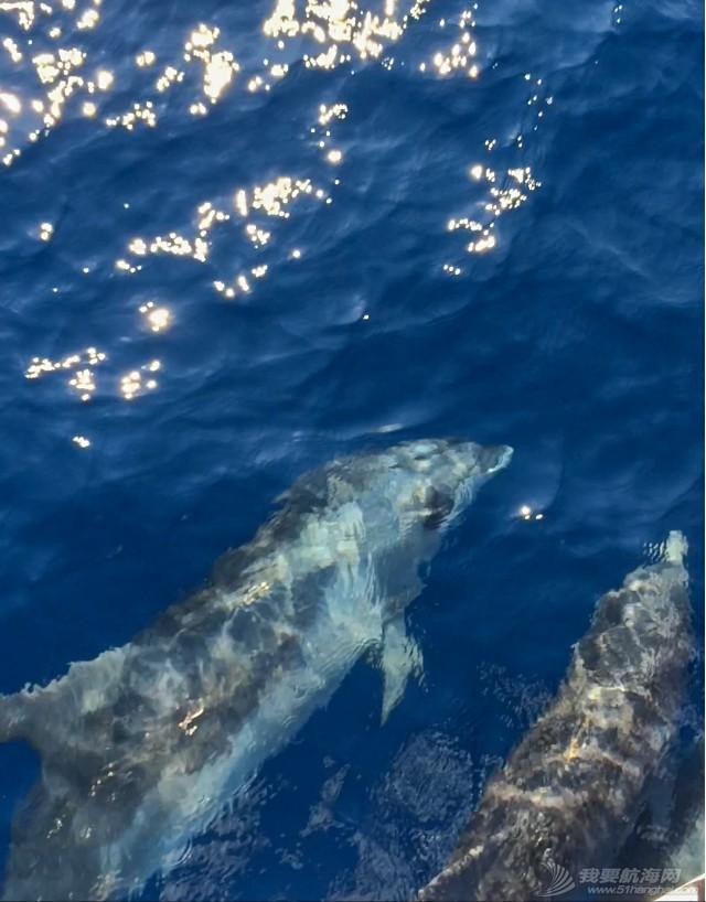 老公,大海,帆船,相机,左右 快乐的海豚伴帆航(有视频) IMG_9118.jpg