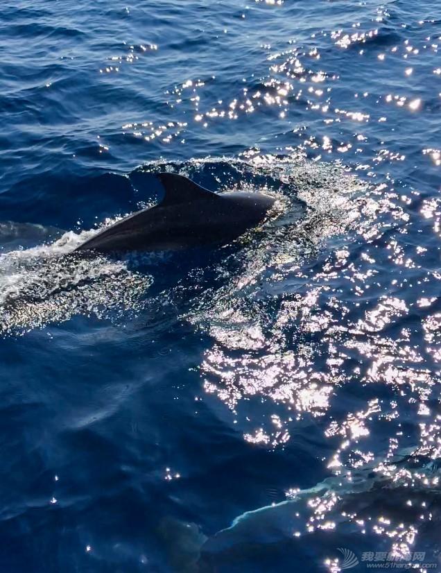 老公,大海,帆船,相机,左右 快乐的海豚伴帆航(有视频) IMG_9128.jpg