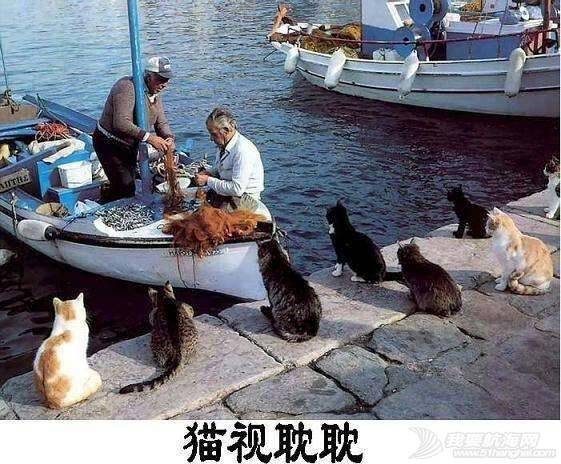 cat的航海日志之(我就是那只天天看着帆船的猫)1章节 215413rr00c6fch45j26ep.jpg