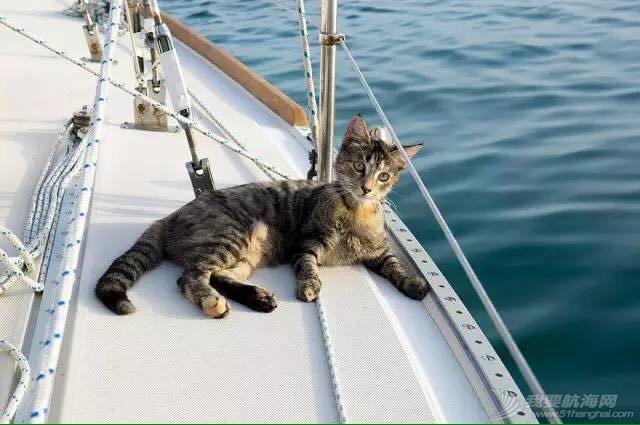 红妆爱武装,小猫,帆船 cat的航海日志之(菜鸟版)2章节 image.jpg