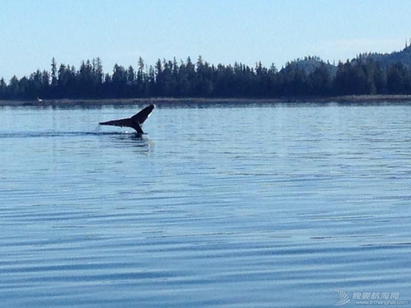 我们险些与鲸鱼相撞 051908u4eivv7dffmfzmqd.jpg