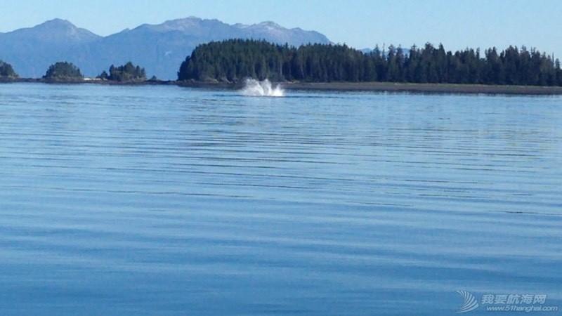 我们险些与鲸鱼相撞 051908zc1g58jjdcx5jrj8.jpg