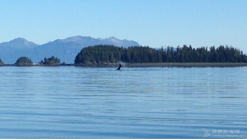 我们险些与鲸鱼相撞 051909apse3zmsgpplexme.jpg