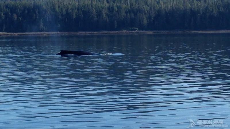 我们险些与鲸鱼相撞 051909zjisz582s2ijh72g.jpg