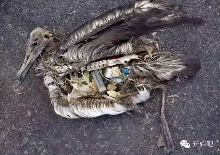 夏威夷,矿泉水瓶,海天一色,塑料袋,下水道 他才21岁,却要改变这个世界,因为大海被人弄脏了 631ac27bb8a342e78c93673752395f5b.jpg