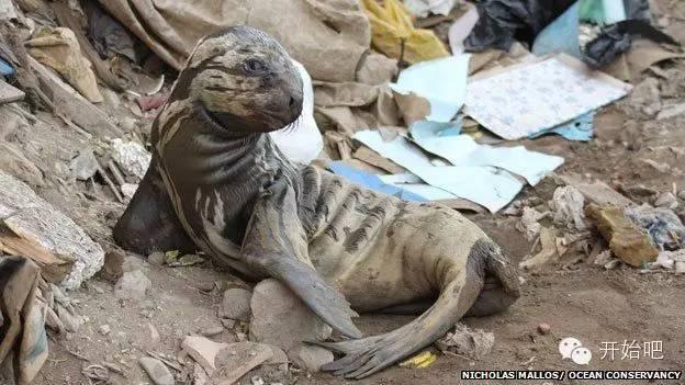 夏威夷,矿泉水瓶,海天一色,塑料袋,下水道 他才21岁,却要改变这个世界,因为大海被人弄脏了 d75b1f73ff7209df0e090c3a1d148c3f.jpg