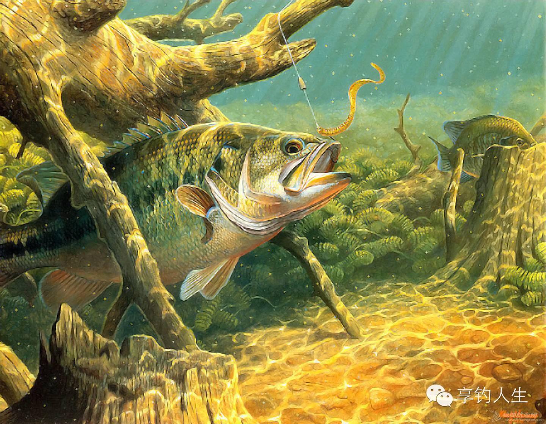 知识 · 路亚钓鱼的基本认识 2b59871197c69f4b5b839586abdaa6cb.jpg