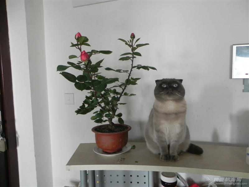 cat的航海日志之(国庆机场之行把我累坏了)31章节