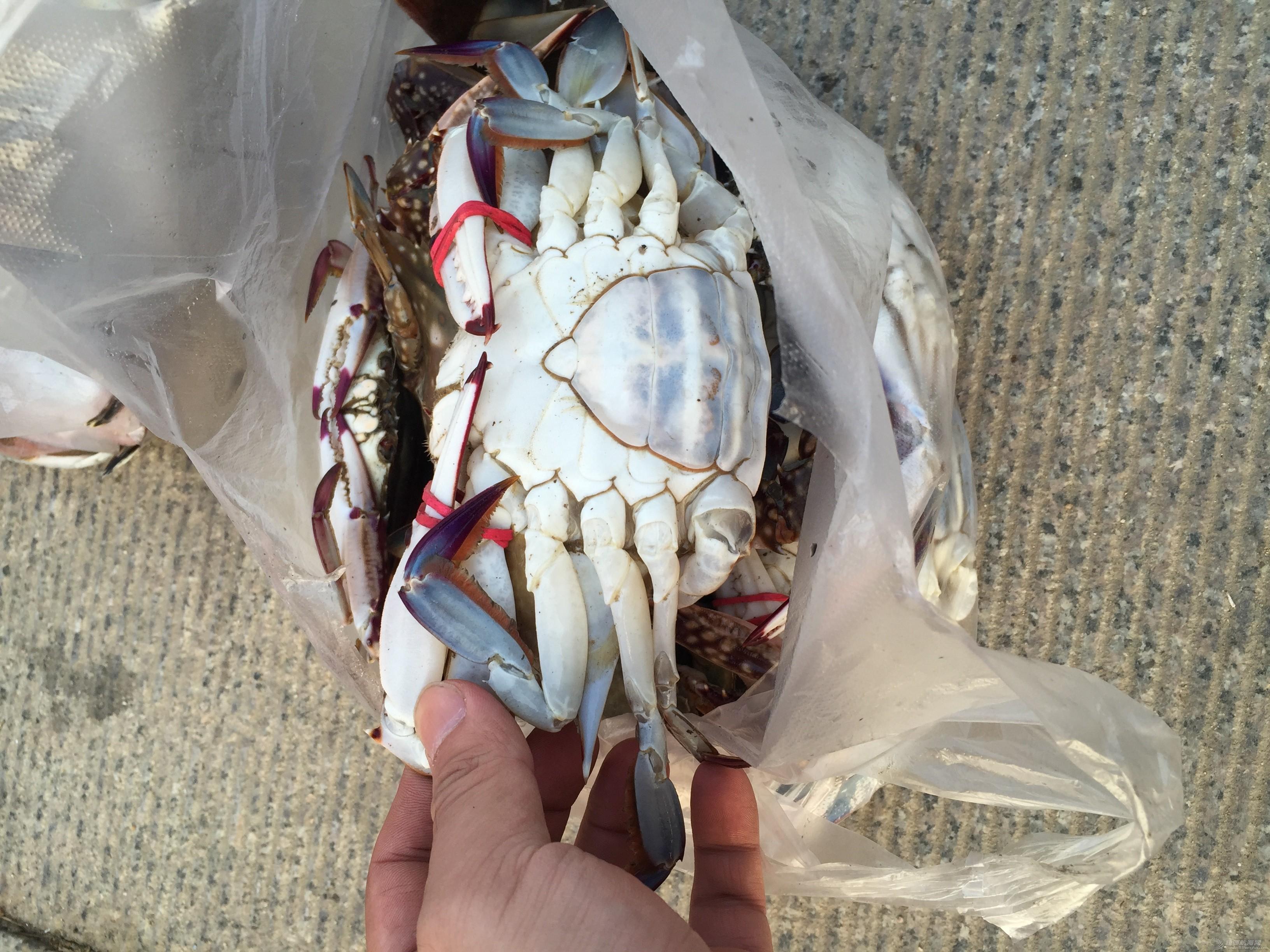 我的义工生活003:包吃住专区 2015-11-02